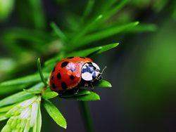 насекомые, щедрый сад