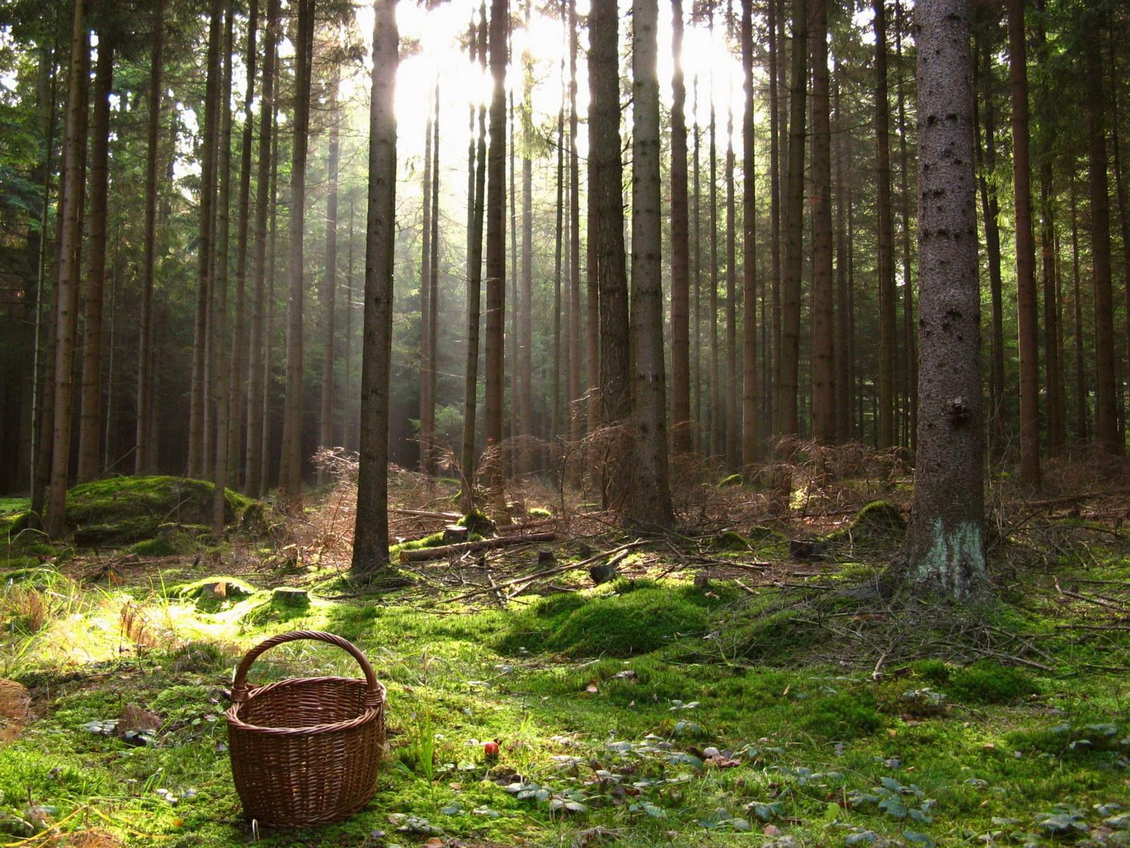 Фото привязанные в лесу 21 фотография