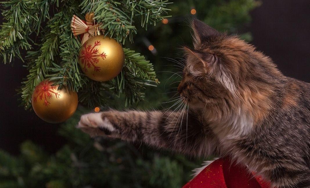 елка кот