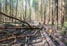 валежник, деревья, лес, бревна