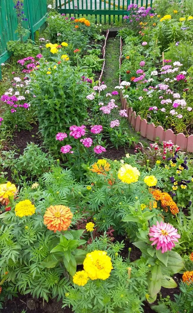 Благоухает цветочными ароматами и бурлит разноцветьем сад С.Сохранновой.
